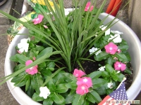 kwiat_056