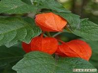 kwiat_059