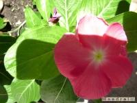 kwiat_069