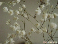 kwiat_074