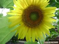 kwiat_075