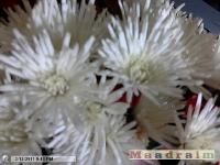 kwiat_077