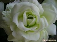 kwiat_080