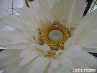 kwiat_081