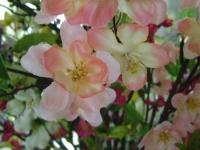 kwiat_083