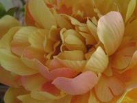 kwiat_085