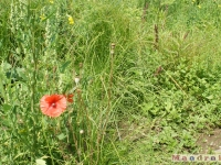 kwiat_089