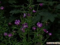 kwiat_098
