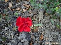 kwiat_106