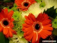kwiat_114