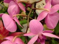 kwiat_122