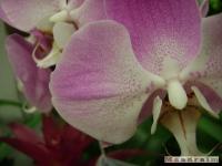 kwiat_124