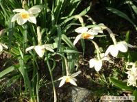 kwiat_133