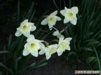 kwiat_135