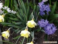 kwiat_151