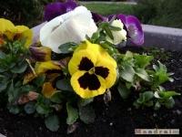 kwiat_154