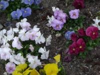 kwiat_157