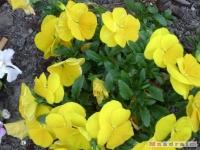 kwiat_158