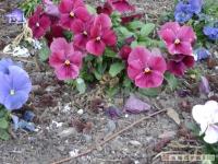 kwiat_159