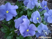 kwiat_160