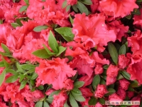 kwiat_163