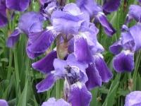 kwiat_167