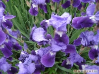 kwiat_168