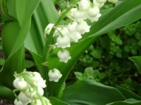 kwiat_169