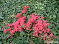 kwiat_175