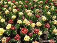 kwiat_177