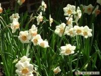 kwiat_178