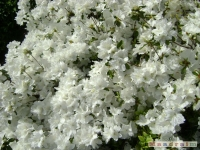 kwiat_179