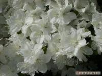 kwiat_180