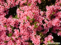 kwiat_184