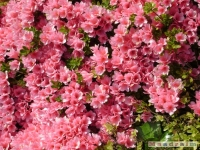 kwiat_185