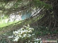 kwiat_186