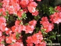kwiat_188