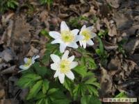 kwiat_191