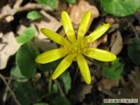 kwiat_192