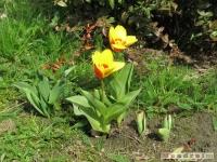 kwiat_193