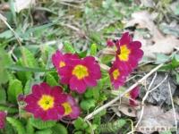 kwiat_194