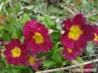 kwiat_195