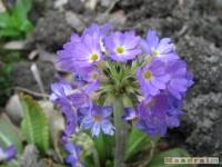 kwiat_197