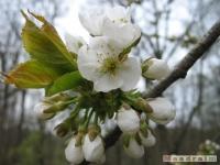 kwiat_198