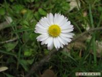 kwiat_202