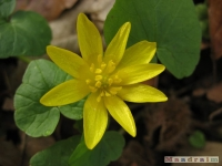 kwiat_205