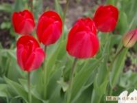 kwiat_207