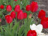 kwiat_208