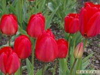 kwiat_209