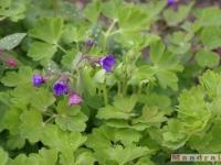 kwiat_210